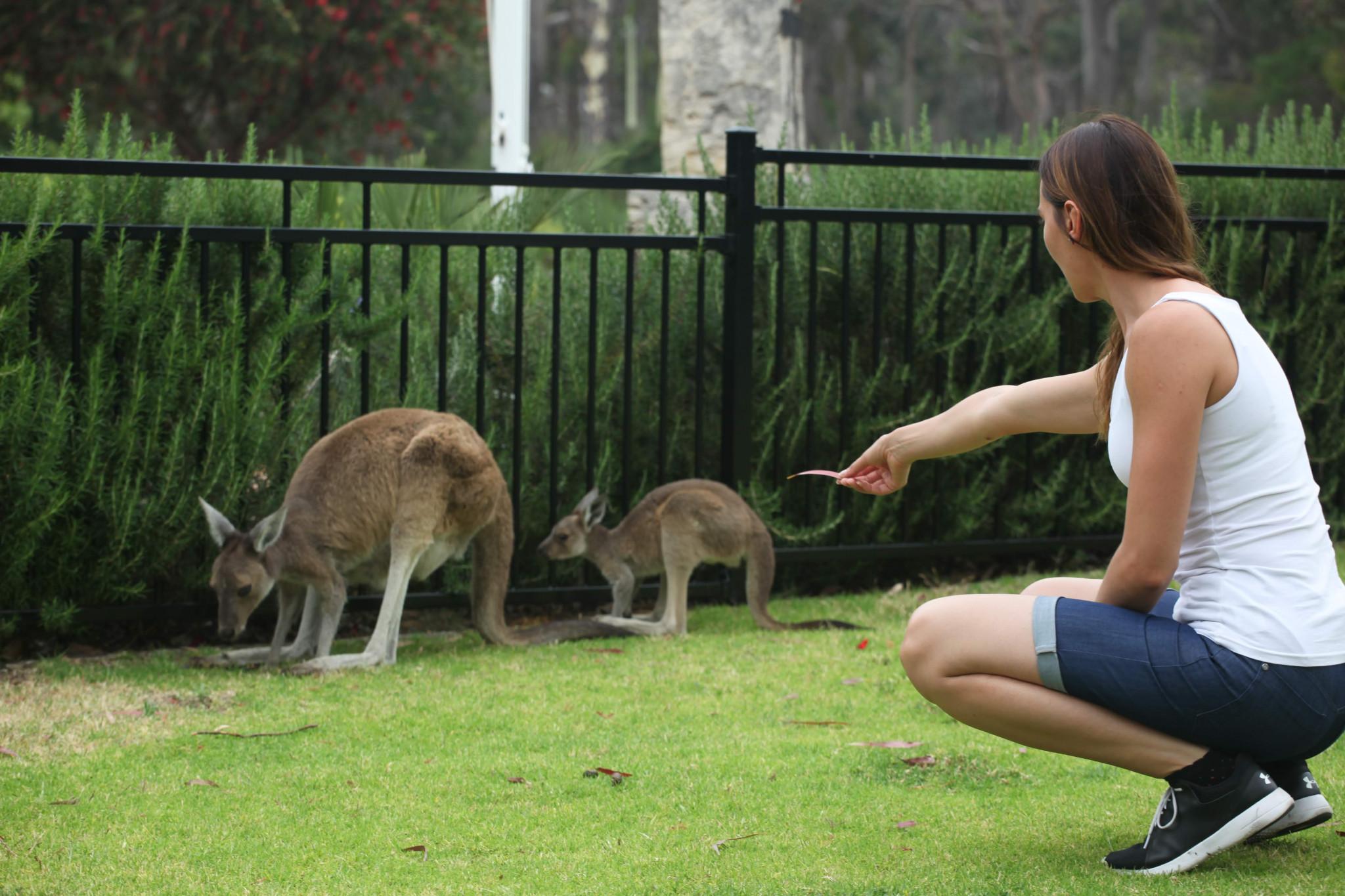 žalia pažintys australija konservatyvus pažintys uk